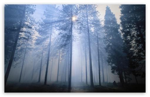 스 태니 슬라 우스 국립 산림 캘리포니아 바탕화면,배경화면