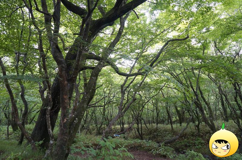 제주도 사려니숲길 숲 내음 힐링