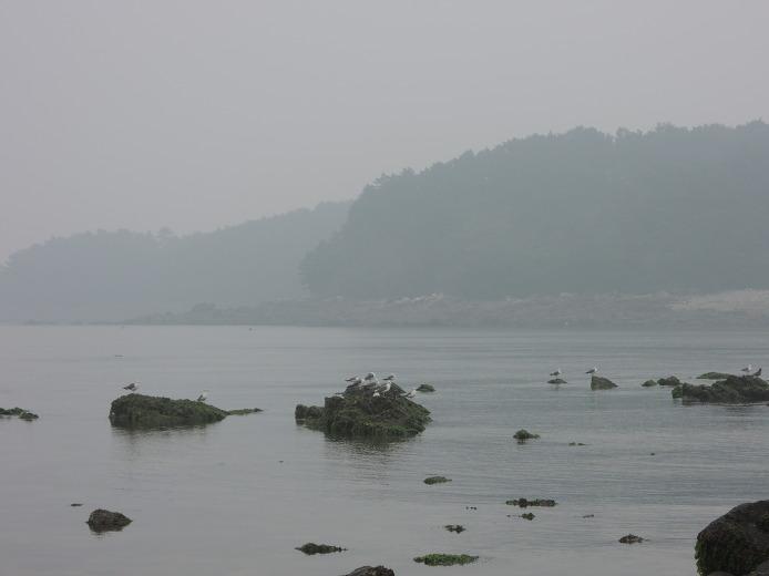 서해 행 가볼만한곳 무창포 신비의 바닷길