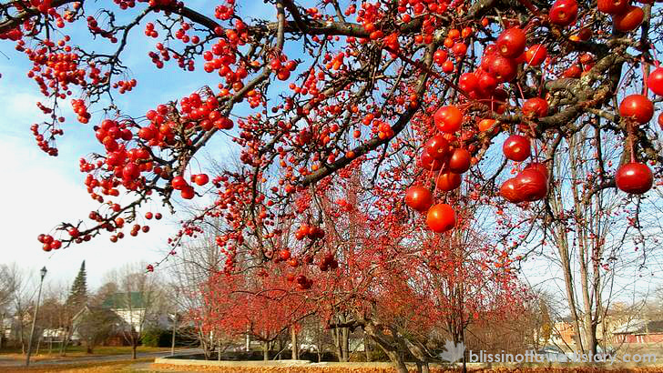 빨간 앵두가 가을 하늘과 잘 어울립니다.