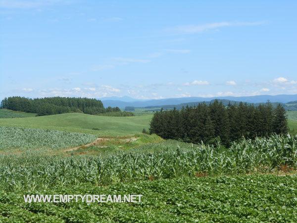 비에이 패치워크 로드 - 홋카이도 자전거 캠핑 여행 17