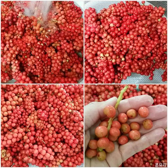 오미자 열매