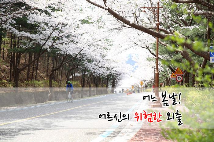 < 충북 대청호 벚꽃길 >