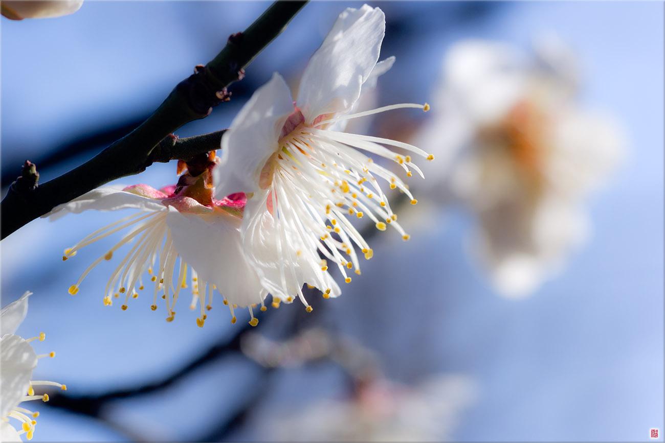 [삼성NX300] Spring feel