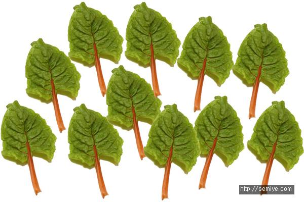 근대-근대뿌리-근대뿌리 주스-채소-고혈압-당뇨-성인병-혈압-근대뿌리 식물-병-건강-콜레스테롤-건강관리