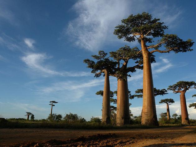 삼성물산 건설부문 아름다운 세계의 섬 3