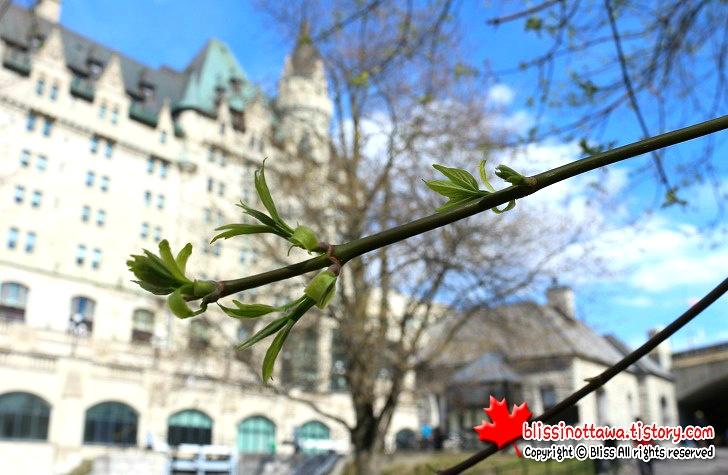 캐나다 오타와 봄이 오다