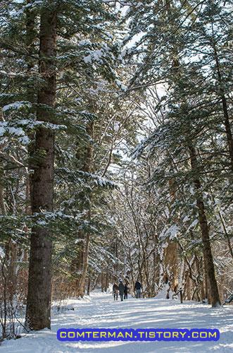 전나무숲길 겨울산책 오대산