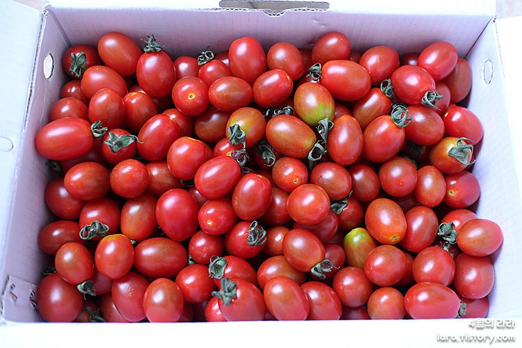 제철 방울토마토로 토마토마리네이드 만드는 법!