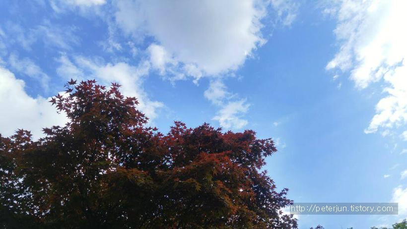푸른 하늘과 단풍나무