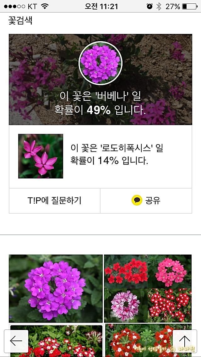 사진으로 꽃이름 알려주는 어플, 다음 꽃검색