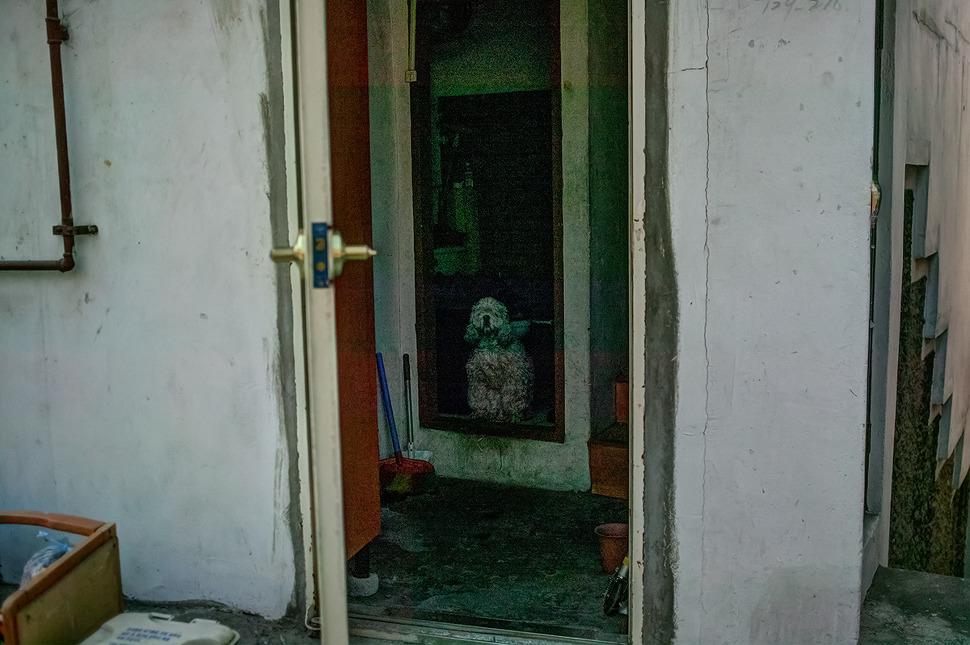 대문을 열고 그리고 방문을 열고 나를 마중나온듯한 강아지 사진. (이화마을)