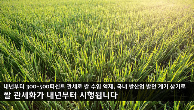 쌀 시장 개방 관세화 썸네일