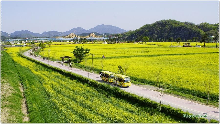남지 유채꽃 풍경