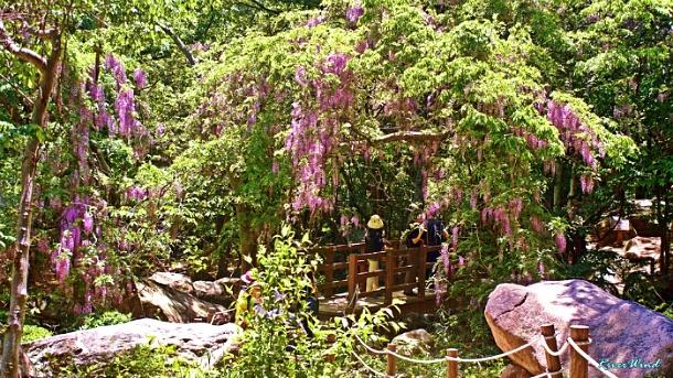 등운곡(藤雲谷)산책