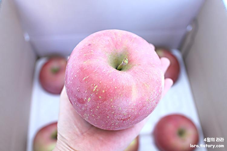 맛있는사과