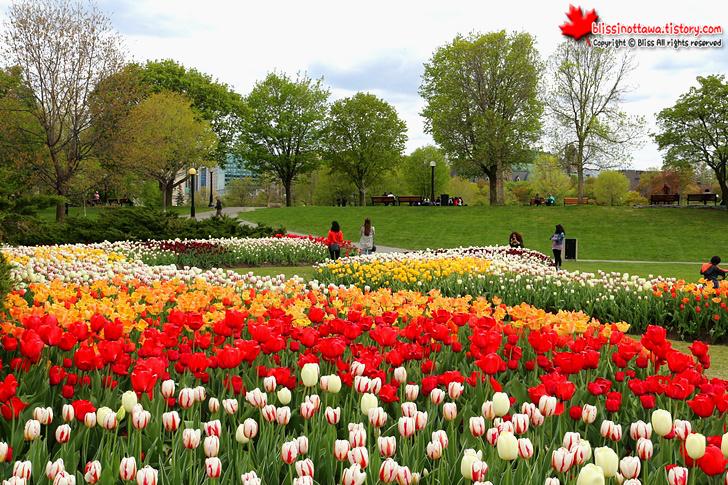 오타와 다운타운 공원