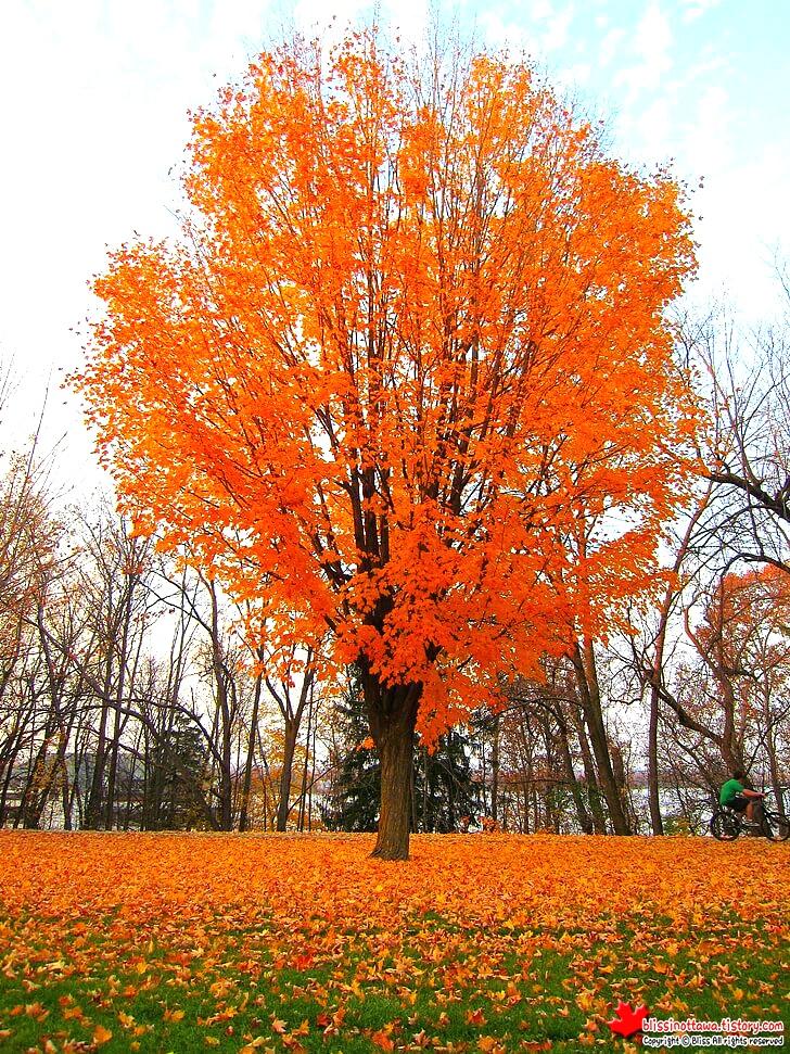 오타와 도심 공원