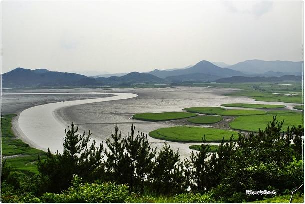 순천만 갯벌 생태탐방