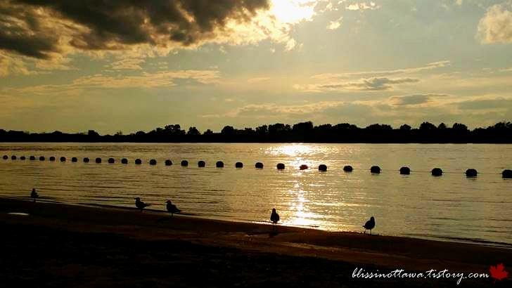 Petrie Island beach입니다