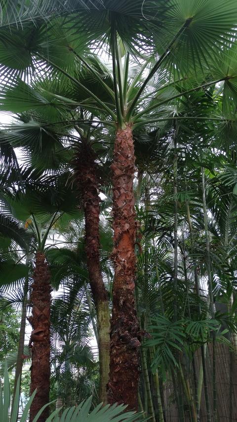 열대식물원 야자원