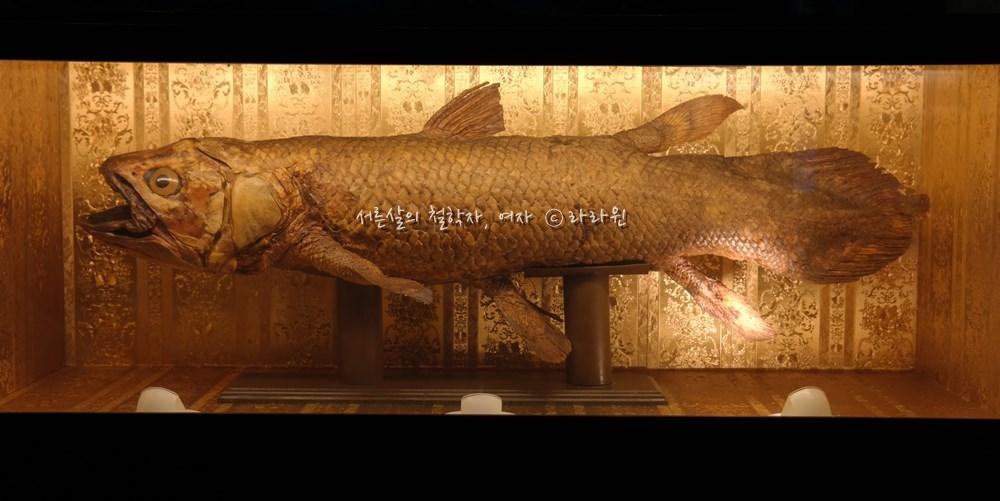 실러캔스, 걸어다니는 물고기,