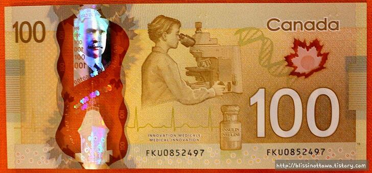캐나다 화폐 소개입니다
