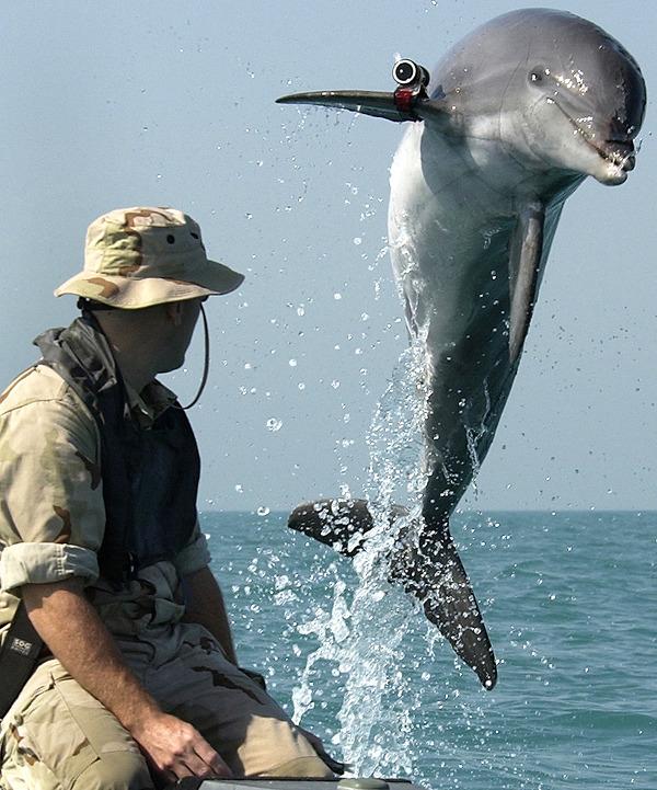 사진: 바다 동물계에서 무서운 포식자인 돌고래. 그러나 인간에게는 지능 높은 장난꾸러기이다