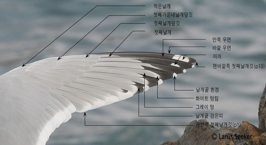 Primary Topography of Gull