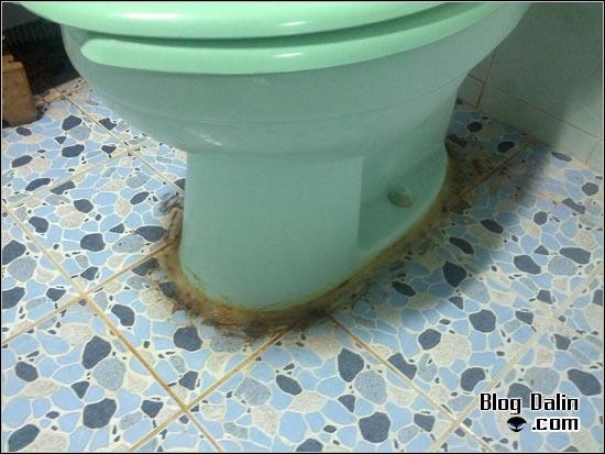 백색 시멘트로 화장실 변기 고정하기_01