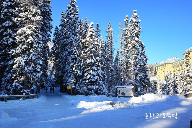 레이크루이스(lake louise)주차장에서 바라본 숲길과 샤토 레이크루이스 호텔