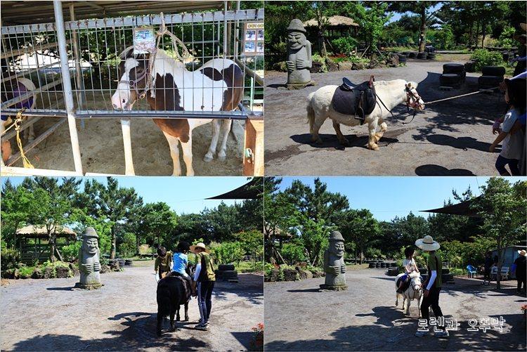 흑돼지쇼를 보러 찾아간 제주 '휴애리 자연생활공원'11