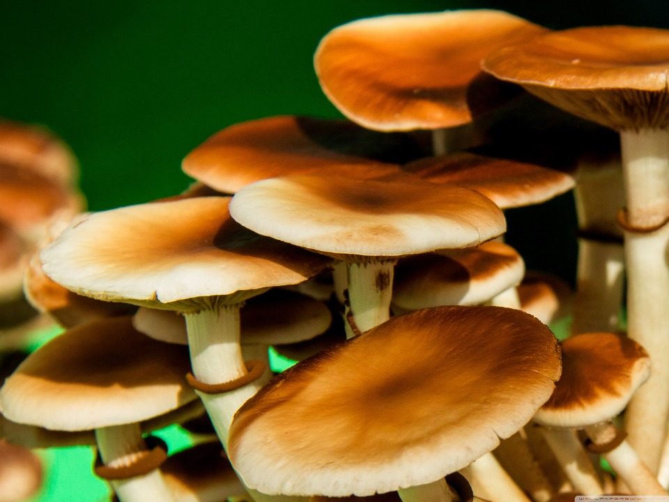 예뿐 고화질 버섯 바탕화면 스마트폰 배경화면