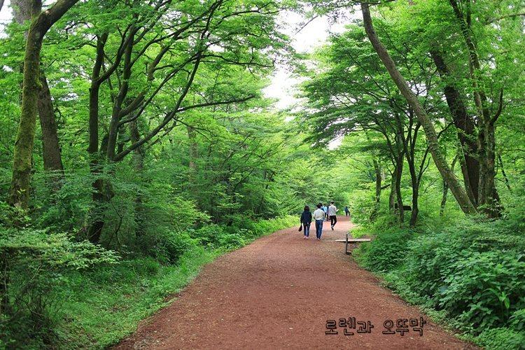 제주도 사려니숲길 짧은 순환로만 걷기15