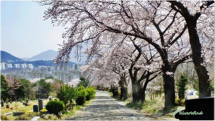 백운공원 꽃대궐