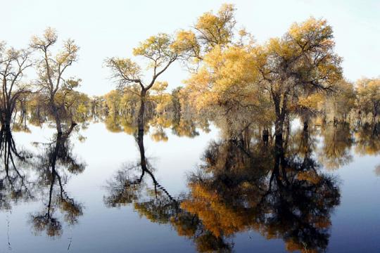 자연이 보호될 수록 인간에겐 위협이 되나?