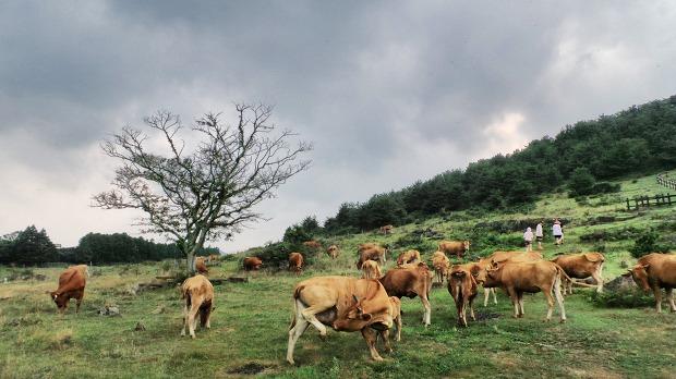 소와 나무