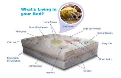 침대 매트리스 진드기 mattress house dust mites
