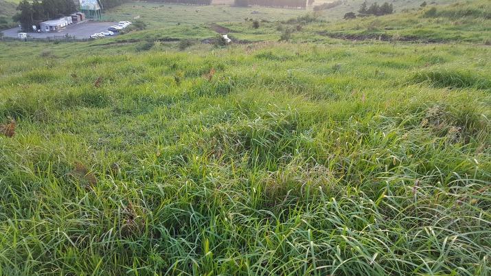 초록색 영롱히 빛나는 잔디밭