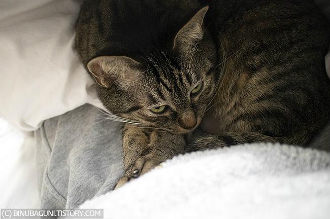 나는 사람으로서가 아니라 고양이 집사로서 가졌던 불안감이 어느 정도 일리가 있었다고 여겨지고 내 대처 방법이(고양이들 물건도 모두 소독하는) 지나치지 않았다는 안도감 또한 가지게 됐다