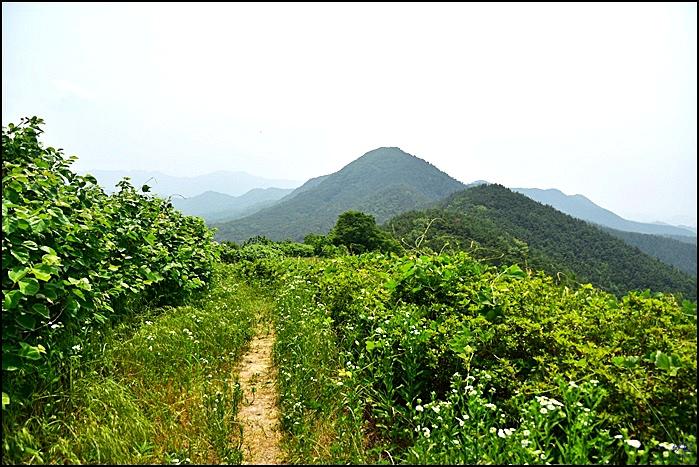 ( 대구 근교 산행 ) 용암산,용암산성