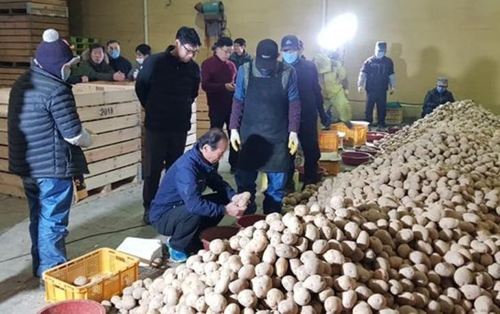 강원도 감자 10kg 5000원 무료배송 매일 오전 10시