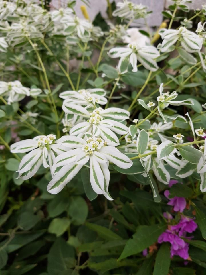꽃이름 검색 꽃이름찾기는 다음앱 꽃검색으로!