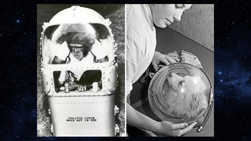 사진: 20세기 중반의 우주 동물들을 위한 캡슐장치들. 왼쪽은 미국의 침팬치, 오른쪽은 소련의 개. [베로니크 호 - 펠리세트 (고양이)]