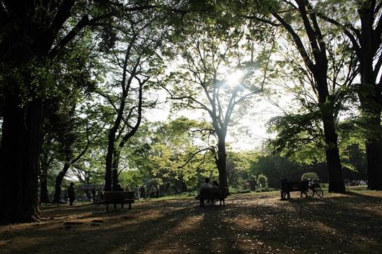 '도쿄 여행' 메이지 신궁은 안다? 요요기 공원은 모른다? (+가는방법)