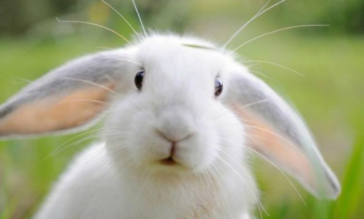 토끼눈이빨간이유