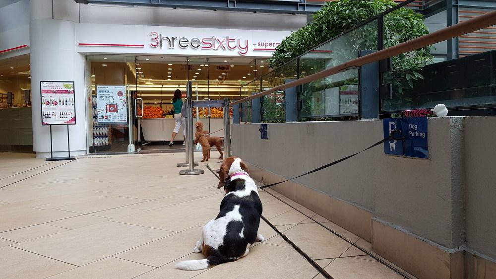 홍콩의 Dog Parking