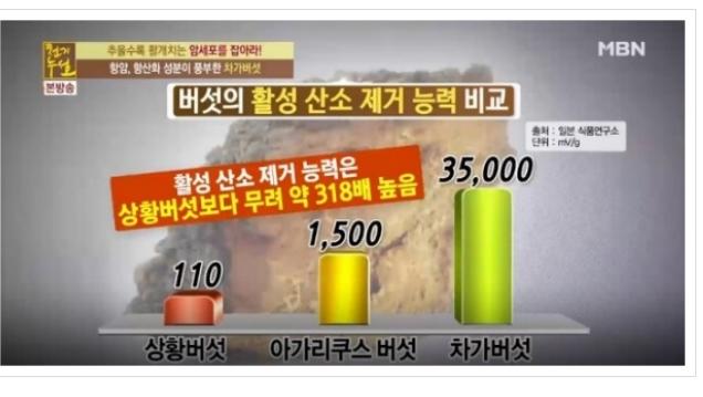 차가버섯효능 <2>