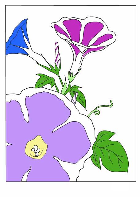 나팔꽃그림 745156