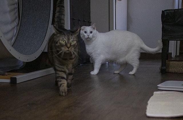 저 멀리 황당함과 궁금함이 뒤섞인 묘한 표정의 경철 고양이